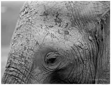 Eye of the Elephant