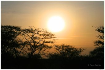 Amboselli Sunset over Acacias