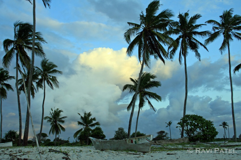 Palm Trees on Diani Beach