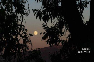 Moon Sighting