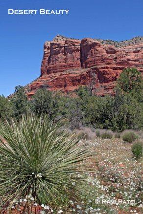 Desert Beauty