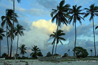 Diani Beach Palm Trees