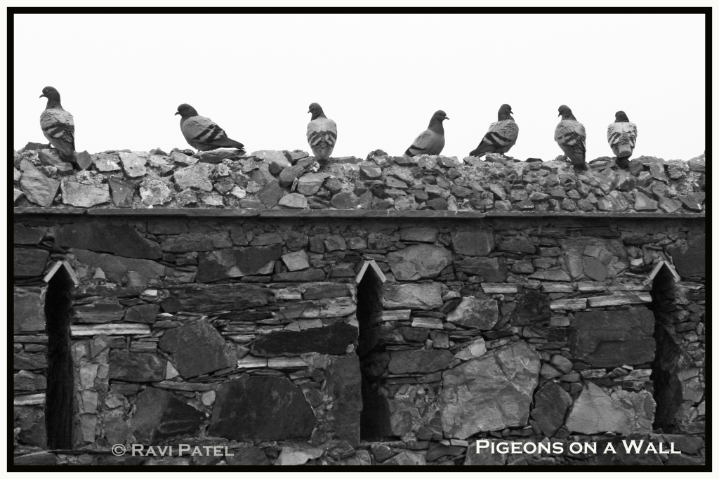 Pigeons on a Wall