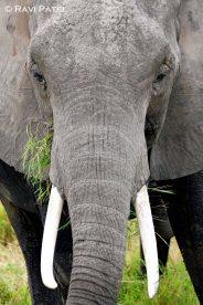 Up Close to an Elephant