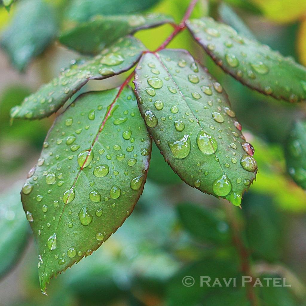 Jewels on Leaves