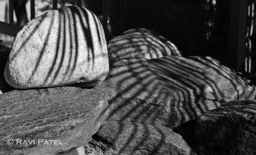 Palm Shadows on Rocks