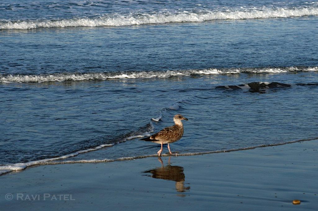 Bird Strolling on the Beach