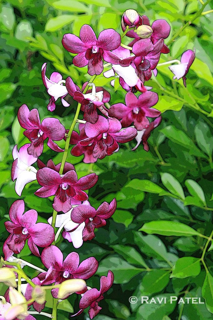 Beauty of Orchids