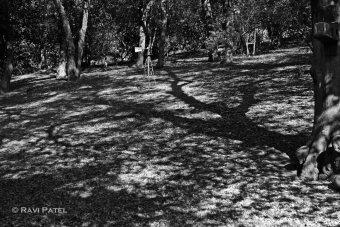Patterns in Shadows