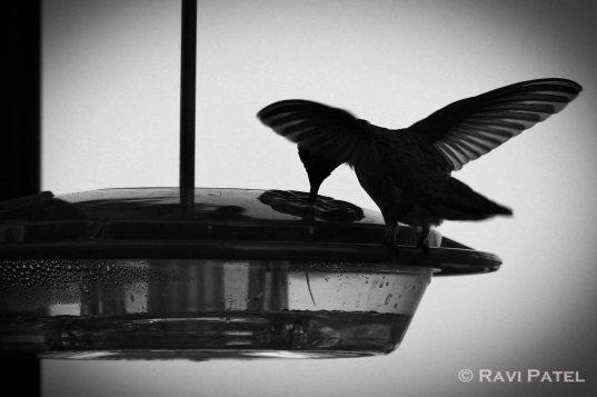 Wings of a Hummingbird
