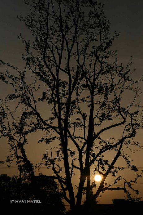 A Tree Silhouette by a Setting Sun
