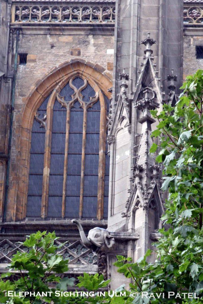 Elephant Sighting in Ulm