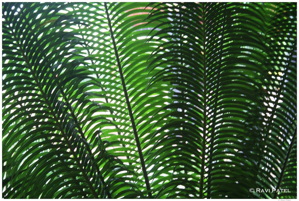 Palm Leaf Grid