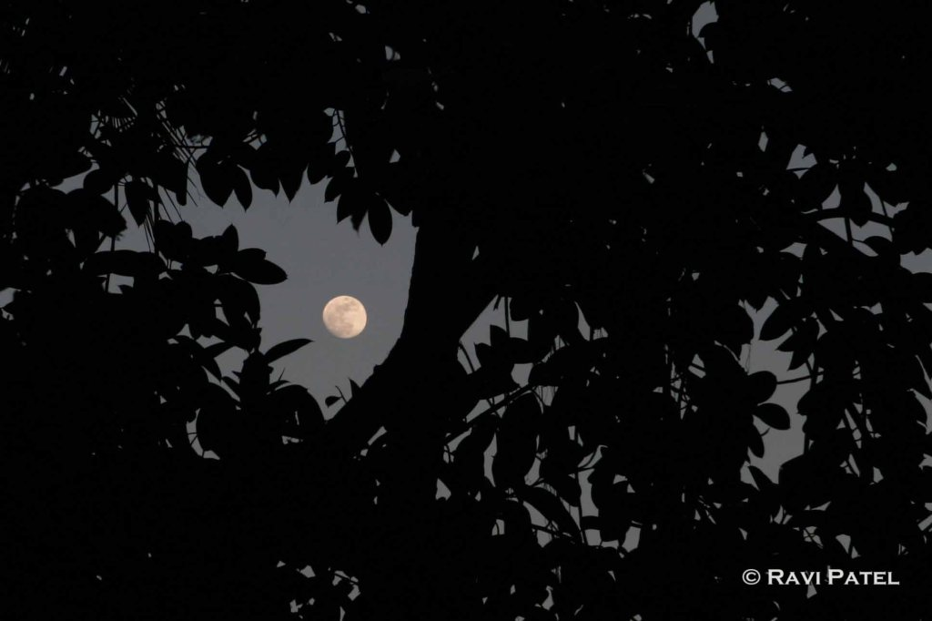 Peeking at the Moon