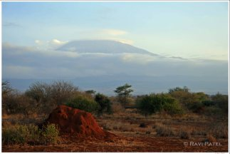 Mt. Kilimanjaro Anthill