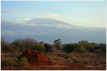 Mt. Kilimanjaro Anthill