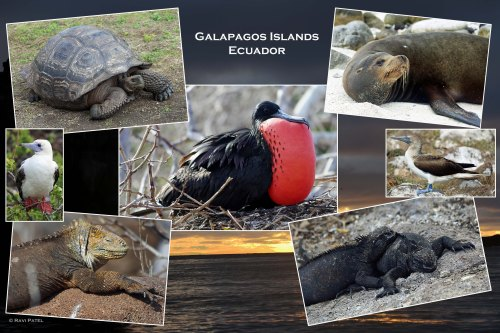 Galapagos - A Photo Collage