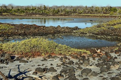 Galapagos Scenes - Dragon Hill Landscape