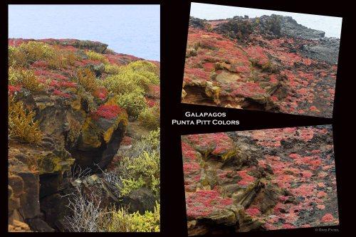 Galapagos Scenes -  Punta Pitt Colors