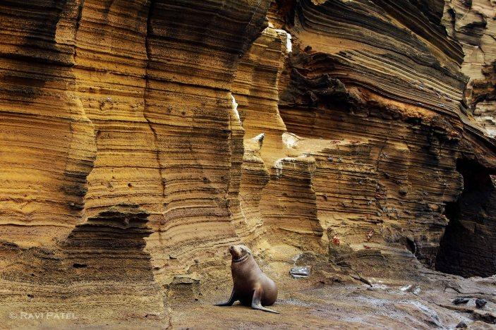 Galapagos Sea Lion Against a Natural Backdrop