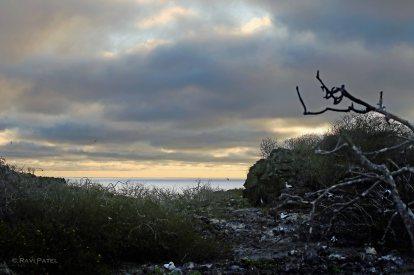 Galapagos Scenes - Sunset