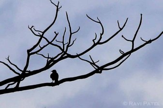 Ecuador Amazon - A Lonely Bird