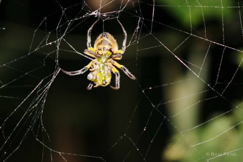 Ecuador Amazon - A Spider's Web