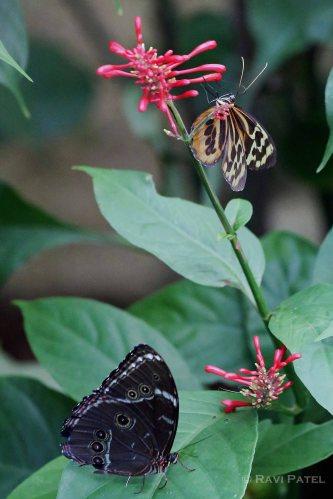 Ecuador Amazon - Butterfly Colors
