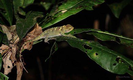 Ecuador Amazon - Perfectly Camouflaged