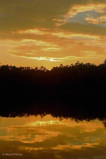 Ecuador Amazon - Sunset Gold