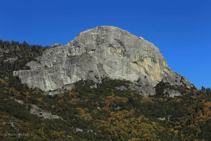 Moro Rock Sequoia
