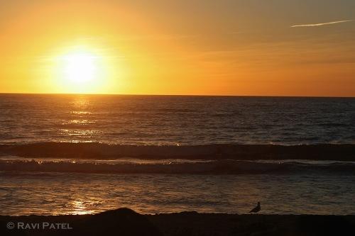 Sunset for a Bird