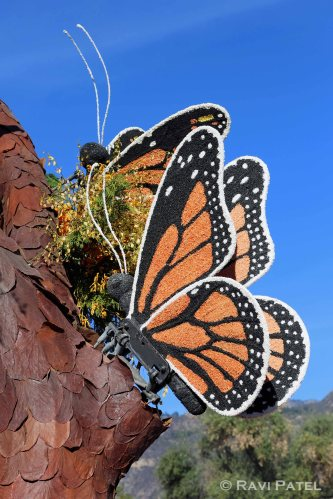 Rose Parade - Butterfly