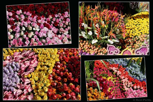 Rose Parade - Colors Galore