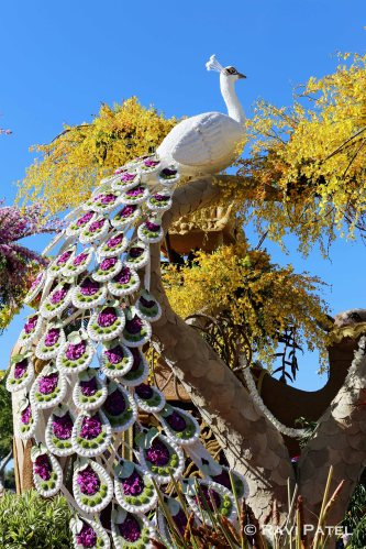 Rose Parade - Peacock