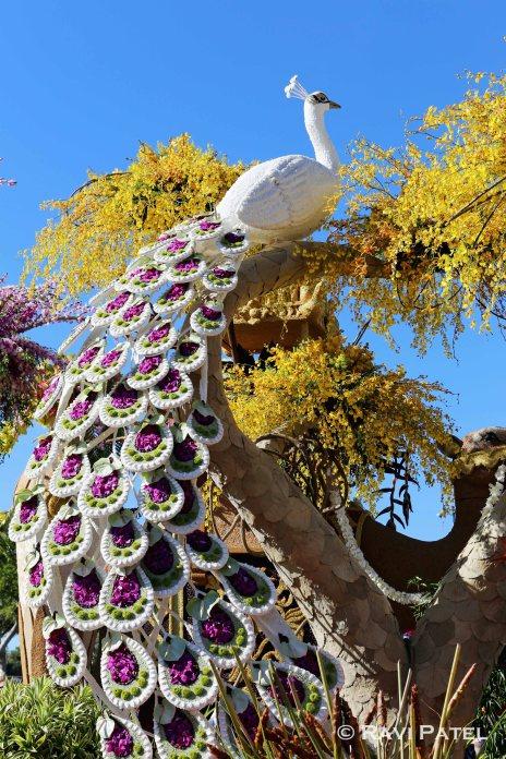 Rose Parade - Peacock