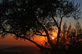 Sunset behind a Tree