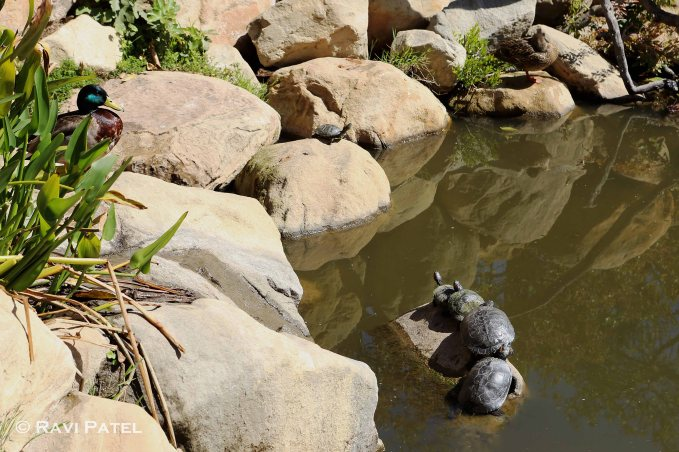 Watching over the Turtles