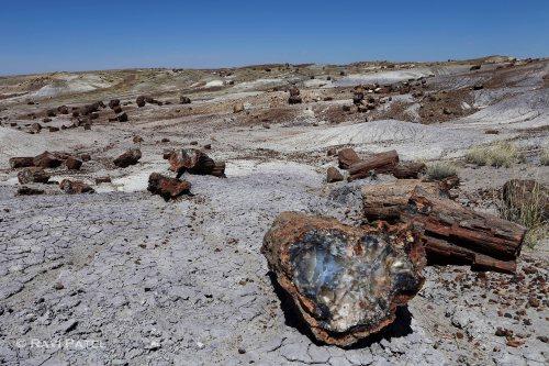 Arizona - Petrified Forest - From Wood to Stone