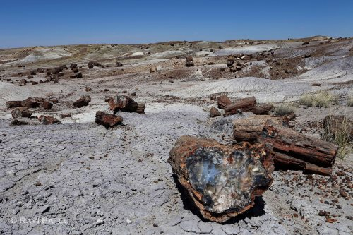 Arizona - Petrified Forest - From Wood to Stone