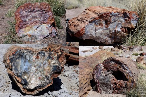 Arizona - Petrified Forest - Wood to Stone Images