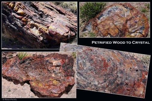 Arizona  - The Crystal Forest - From Petrified Wood to Crystal