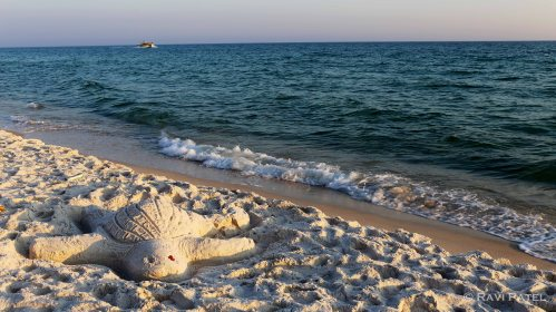 Florida - Turtle on Panama City Beach