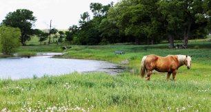 Texas - Rural Landscape