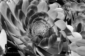 Concentric Circles of Nature