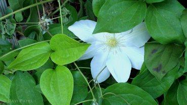 Hiding Flower