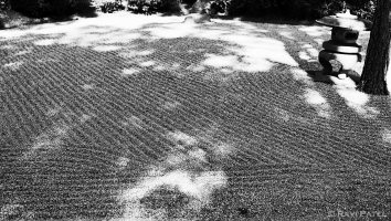 Lines and Shadows in a Japanese Garden