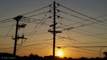 A Gathering of Birds at Sunset
