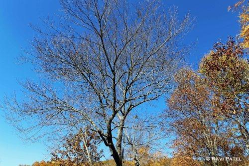 Barren Yet Attractive Tree