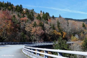 Colorful Trees Around the Bend